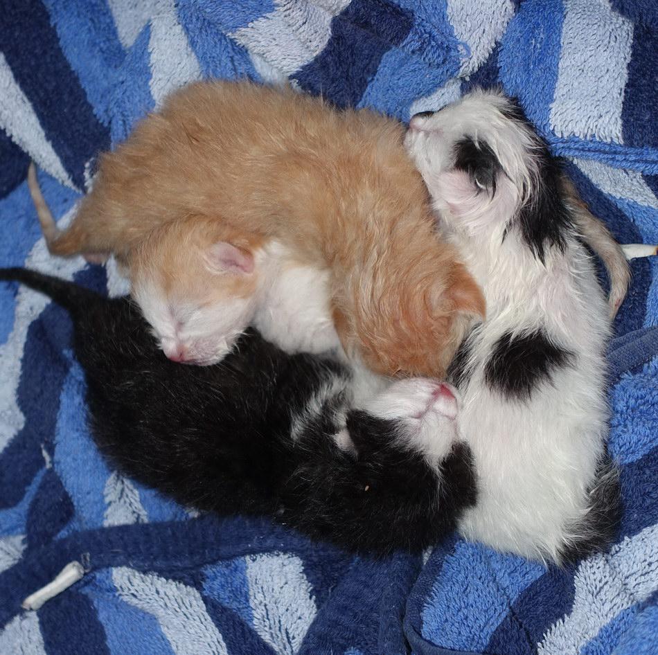 Katze mit Welpen
