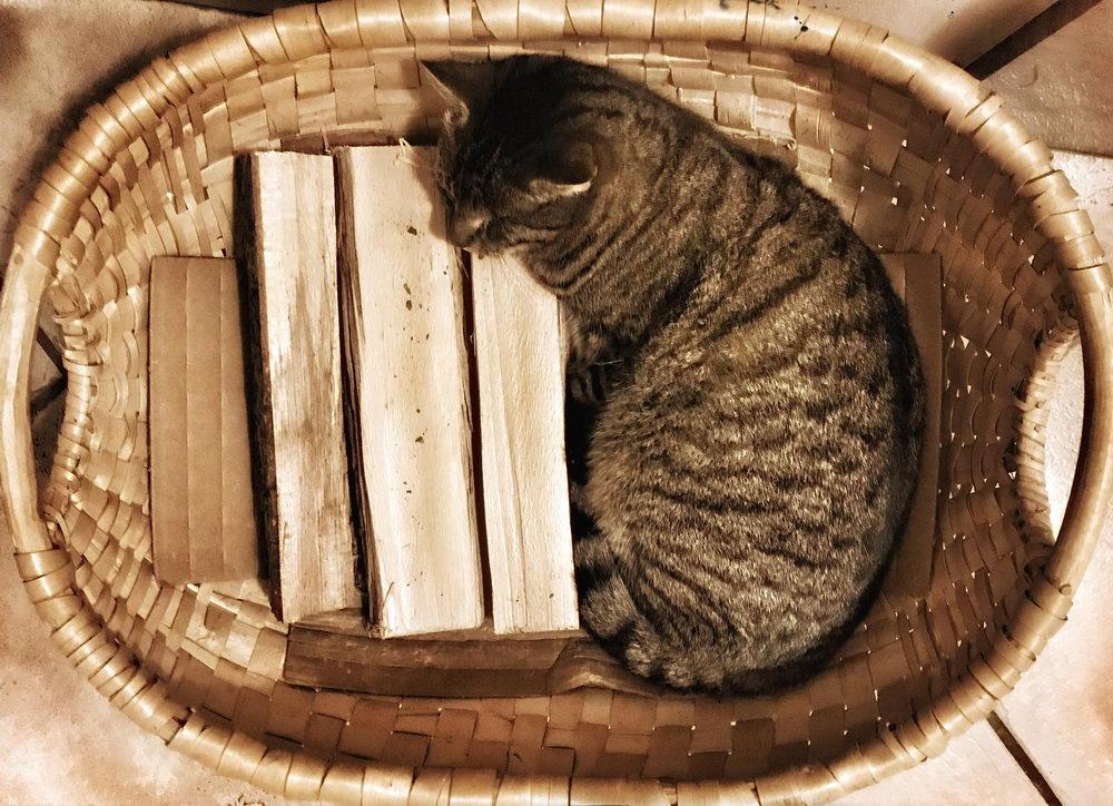 Albert liegt mit Vorliebe in der Holzschwinge beim Kachelofen