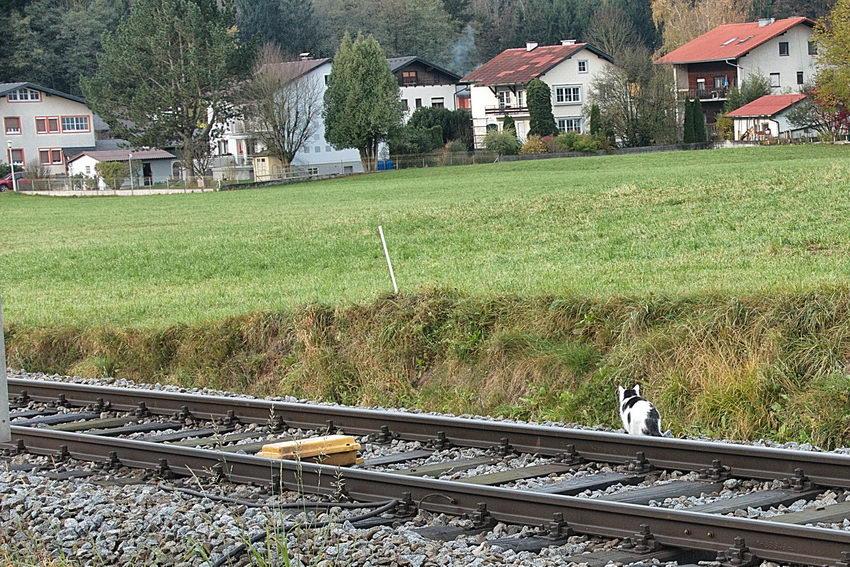 Die Katze am Bahngleis